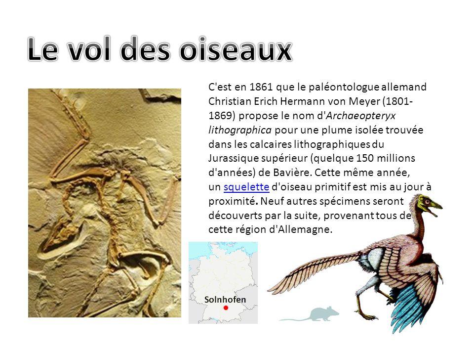 C est en 1861 que le paléontologue allemand Christian Erich Hermann von Meyer (1801- 1869) propose le nom d Archaeopteryx lithographica pour une plume isolée trouvée dans les calcaires lithographiques du Jurassique supérieur (quelque 150 millions d années) de Bavière.