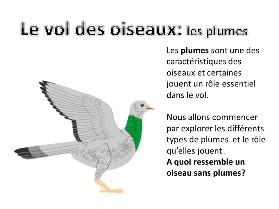 Il y a les plumes qui permettent disoler le corps.