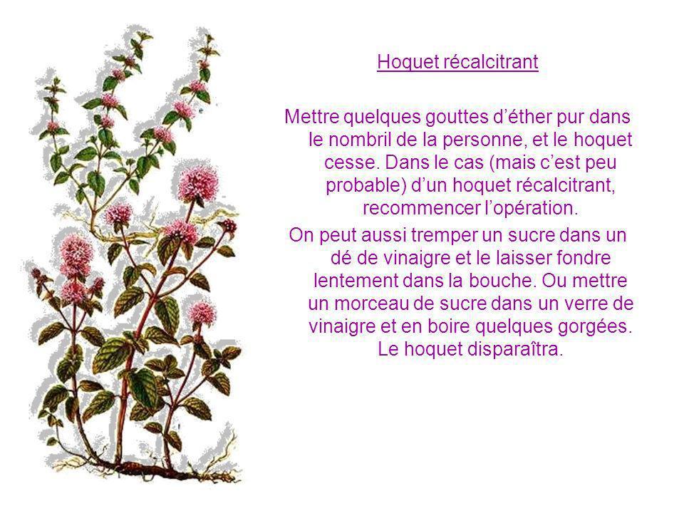 Hémorroïdes Faites une décoction avec 60 fleurs de camomille pour 1 litre deau.