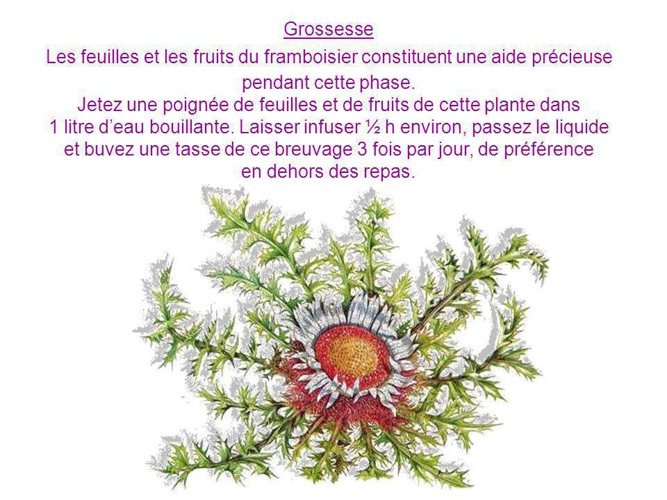 Grossesse Les feuilles et les fruits du framboisier constituent une aide précieuse pendant cette phase.