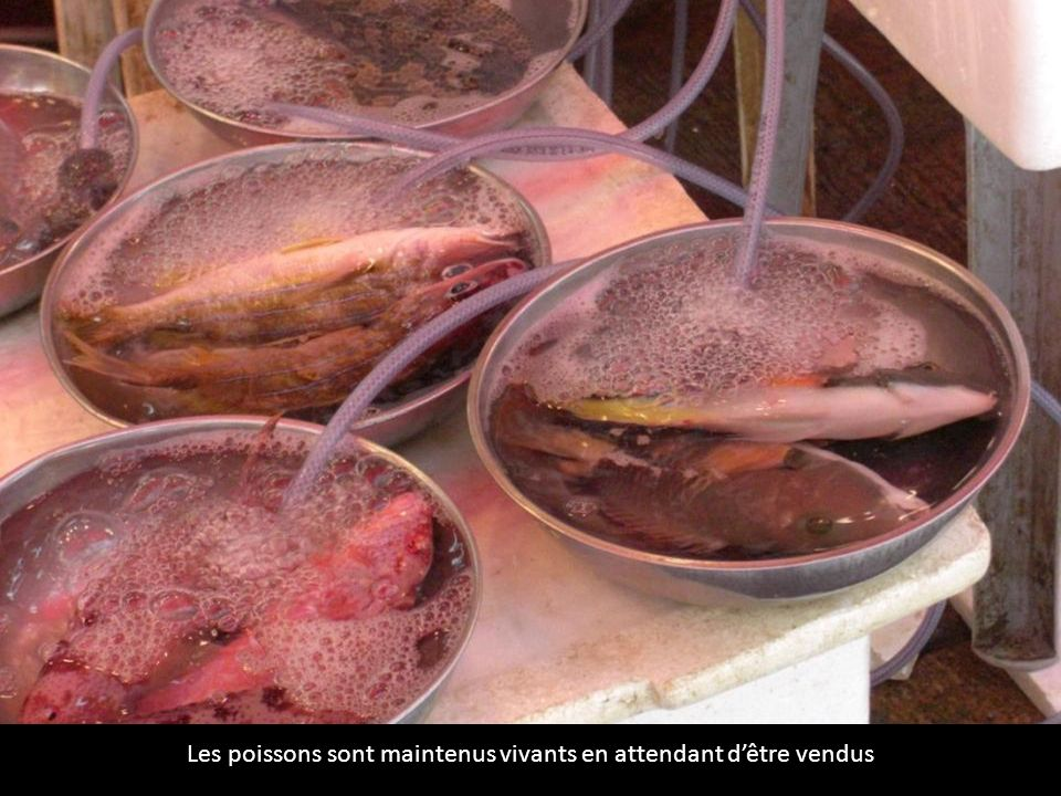 Les poissons sont maintenus vivants en attendant dêtre vendus