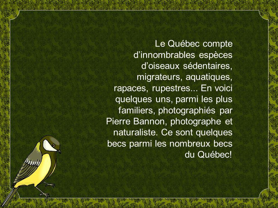 Le Québec compte dinnombrables espèces doiseaux sédentaires, migrateurs, aquatiques, rapaces, rupestres...