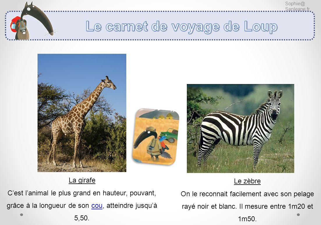 Sophie@ Sanleane.fr La girafe Cest lanimal le plus grand en hauteur, pouvant, grâce à la longueur de son cou, atteindre jusquà 5,50. Le zèbre On le re