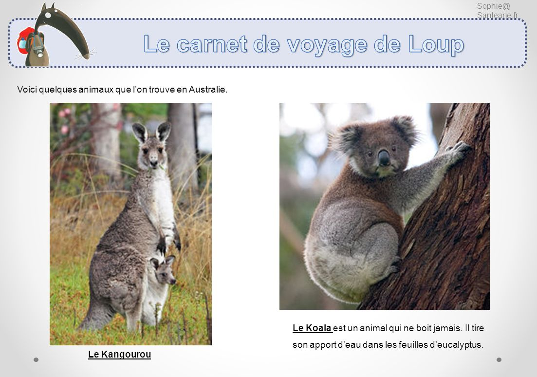 Sophie@ Sanleane.fr Voici quelques animaux que lon trouve en Australie. Le Kangourou Le Koala est un animal qui ne boit jamais. Il tire son apport dea