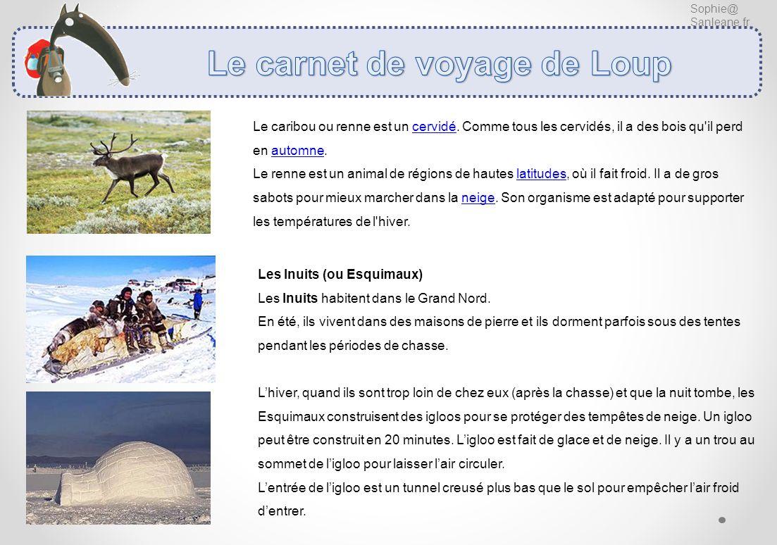 Sophie@ Sanleane.fr Le caribou ou renne est un cervidé. Comme tous les cervidés, il a des bois qu'il perd en automne. Le renne est un animal de région