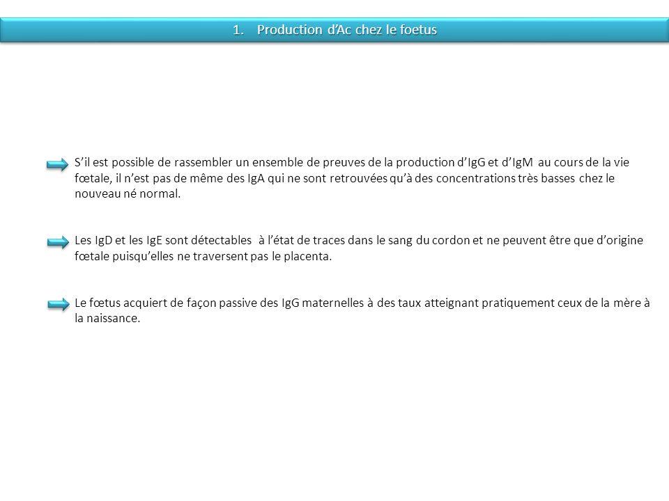 1. Production dAc chez le foetus Sil est possible de rassembler un ensemble de preuves de la production dIgG et dIgM au cours de la vie fœtale, il nes