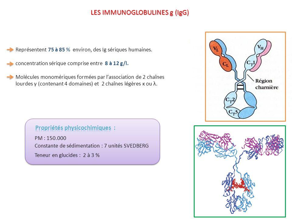 LES IMMUNOGLOBULINES g (IgG) Représentent 75 à 85 % environ, des Ig sériques humaines. concentration sérique comprise entre 8 à 12 g/l. Molécules mono