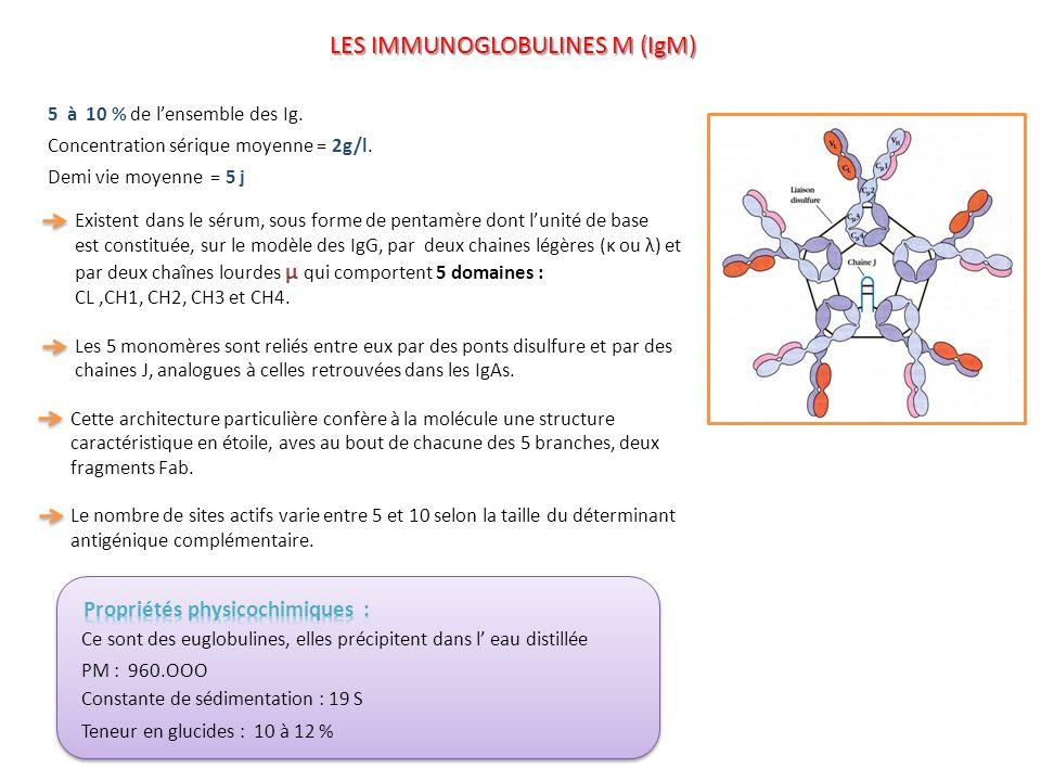 5 à 10 % de lensemble des Ig. Concentration sérique moyenne = 2g/l. Demi vie moyenne = 5 j Existent dans le sérum, sous forme de pentamère dont lunité