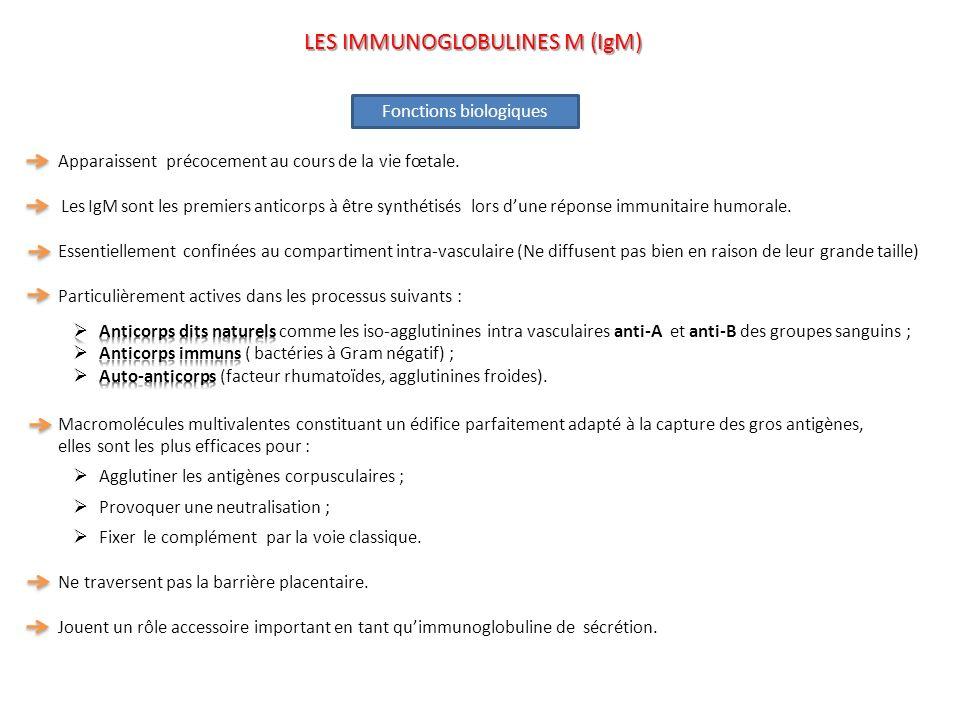 Fonctions biologiques LES IMMUNOGLOBULINES M (IgM)