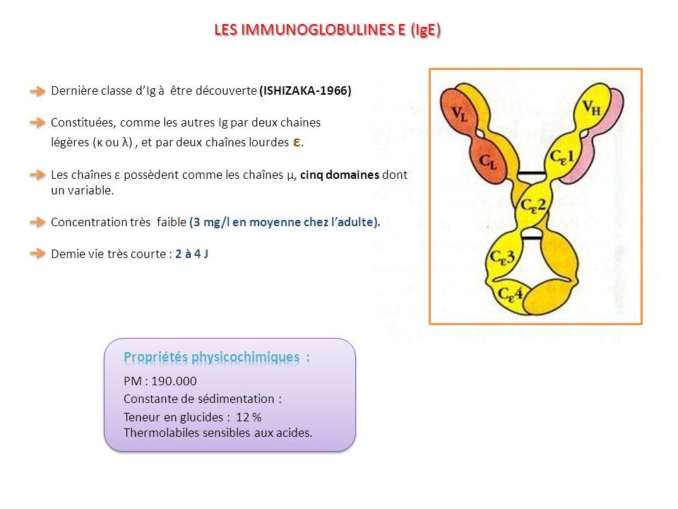 Dernière classe dIg à être découverte (ISHIZAKA-1966) Constituées, comme les autres Ig par deux chaines légères (κ ou λ), et par deux chaînes lourdes