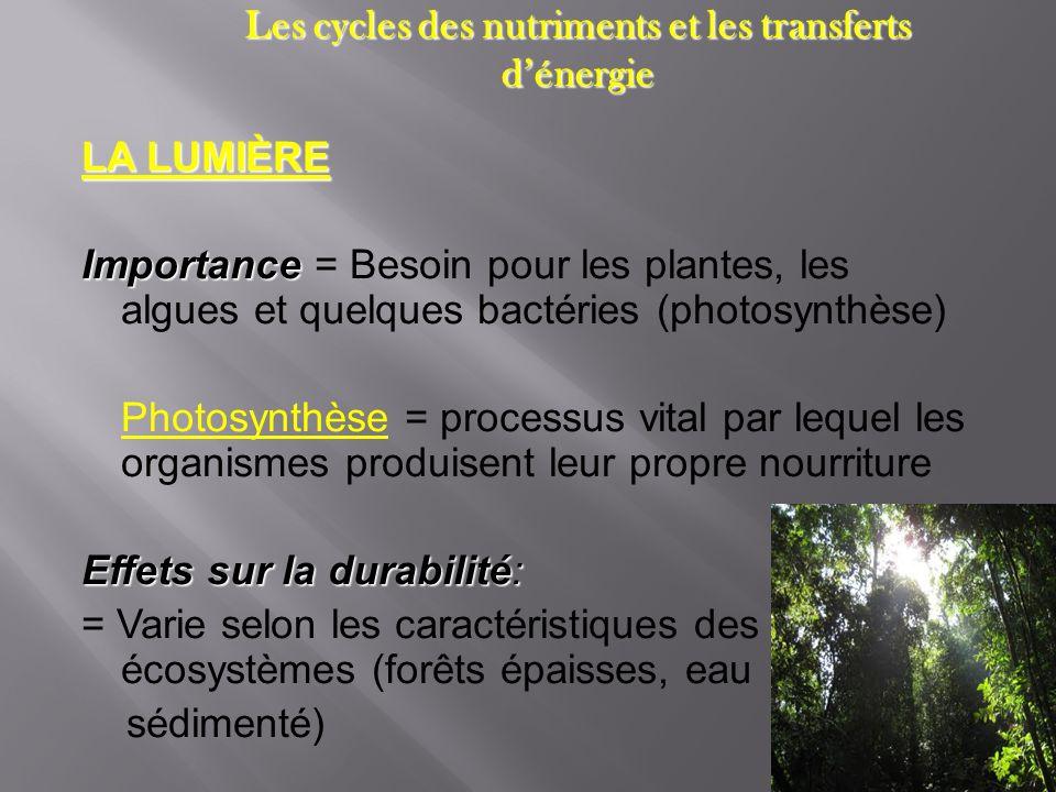 Les cycles des nutriments et les transferts dénergie LA LUMIÈRE Importance Importance = Besoin pour les plantes, les algues et quelques bactéries (pho