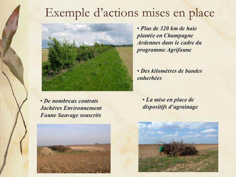 Exemple dactions mises en place Plus de 320 km de haie plantée en Champagne Ardennes dans le cadre du programme Agrifaune Des kilomètres de bandes enherbées De nombreux contrats Jachères Environnement Faune Sauvage souscrits La mise en place de dispositifs dagrainage