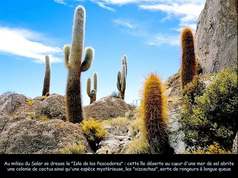 La particularité célèbre de l'Isla de Los Pescadores, c est quelle est recouverte d immenses cactus