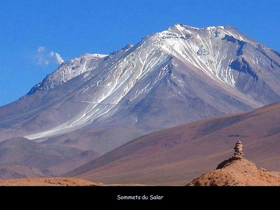 La Bolivie abrite une faune très variée, comprenant, entre autres, des ours, des jaguars ou des tapirs, ainsi que différentes espèces de lamas