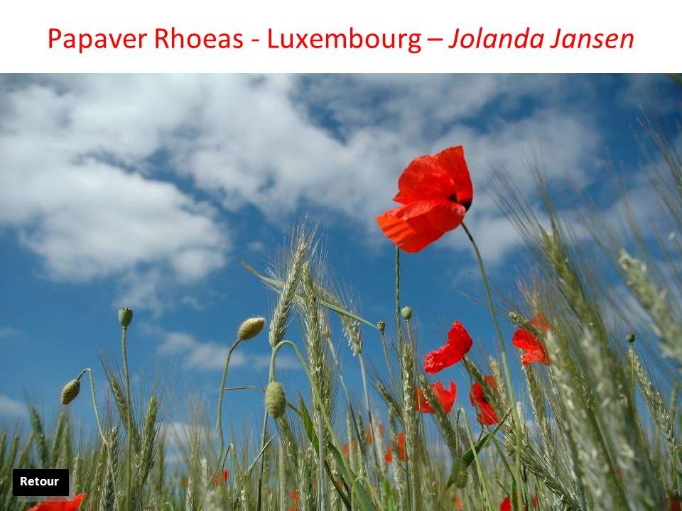 Papaver Rhoeas - Luxembourg – Jolanda Jansen Retour