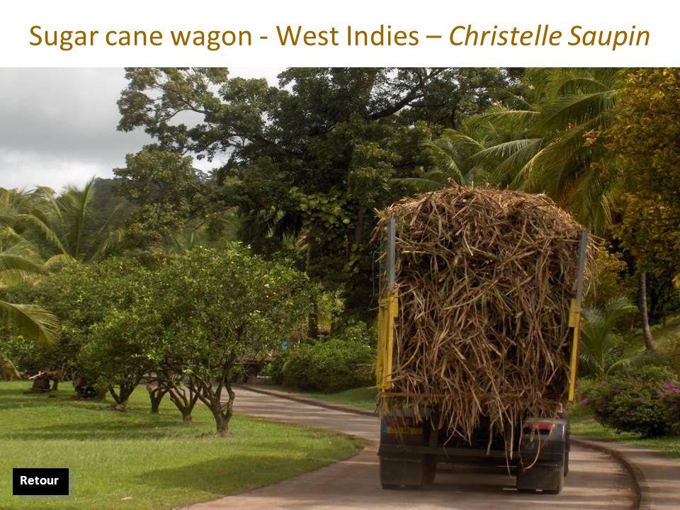 Sugar cane wagon - West Indies – Christelle Saupin Retour