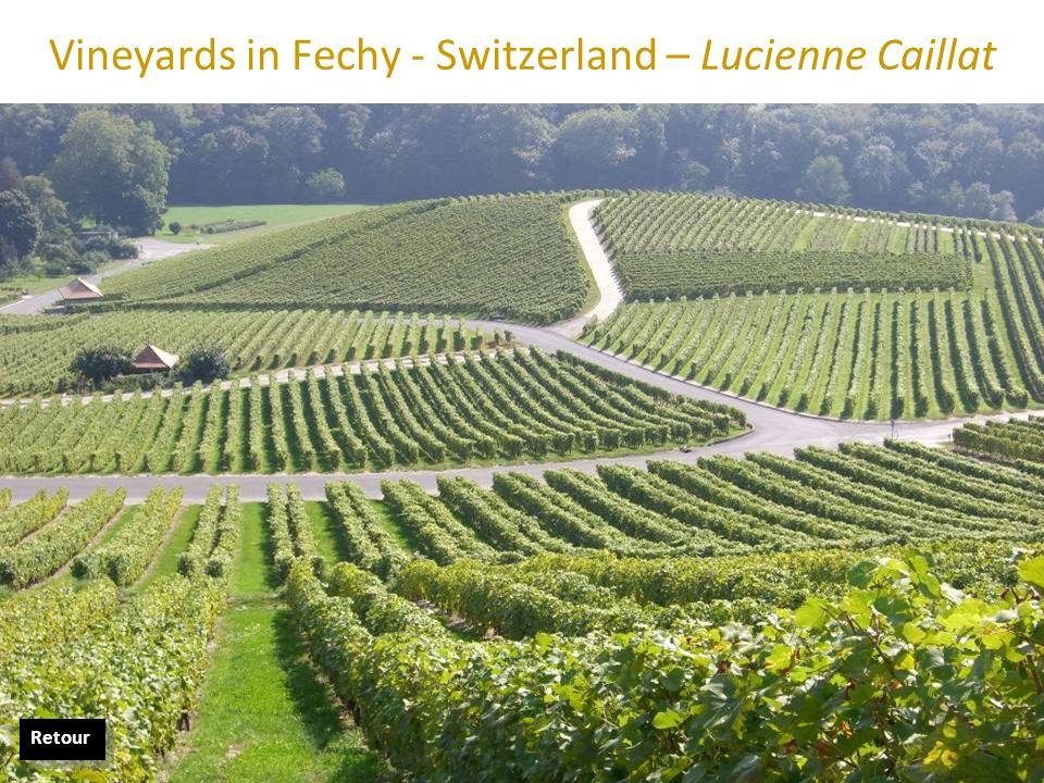 Vineyards in Fechy - Switzerland – Lucienne Caillat Retour