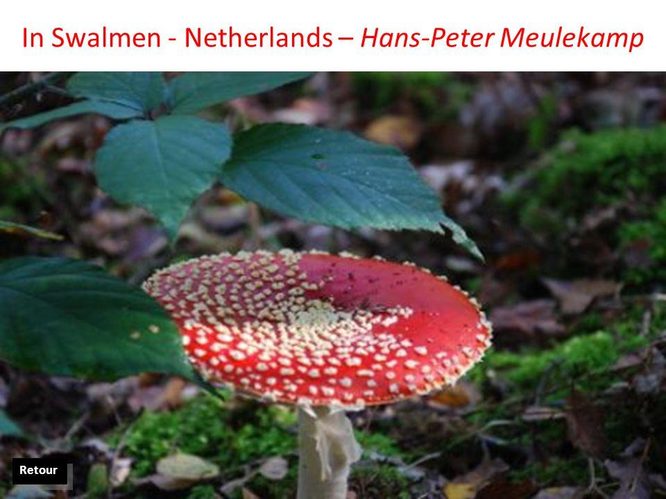 In Swalmen - Netherlands – Hans-Peter Meulekamp Retour