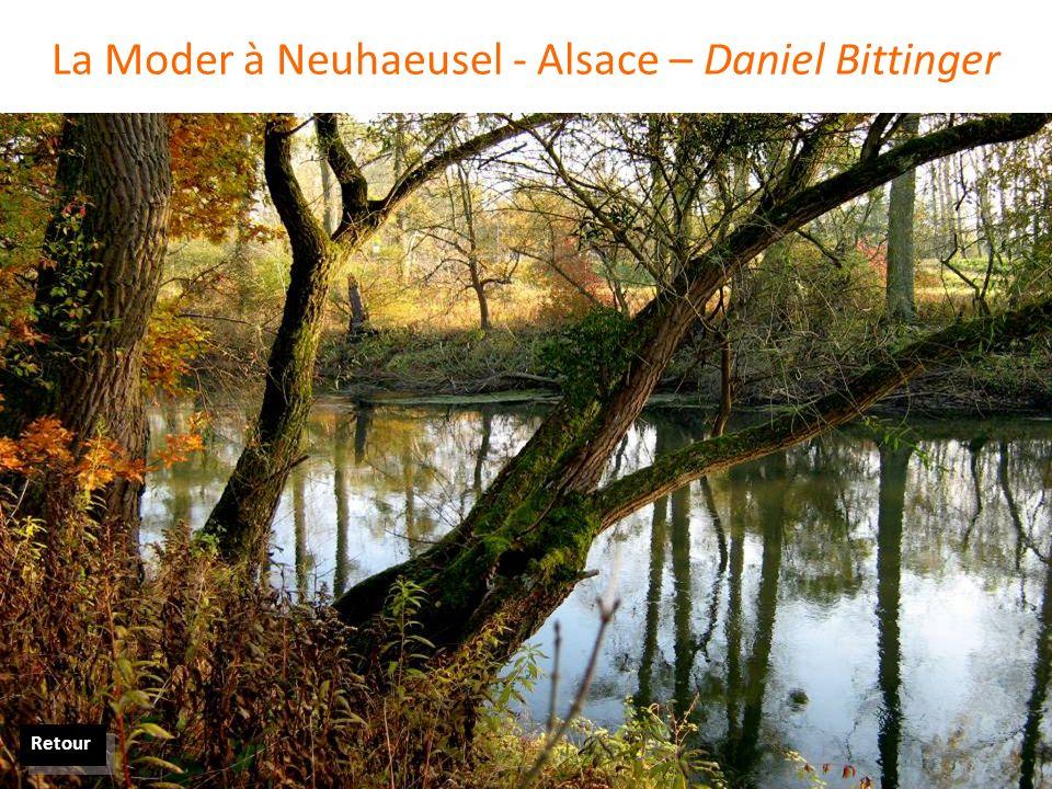 La Moder à Neuhaeusel - Alsace – Daniel Bittinger Retour