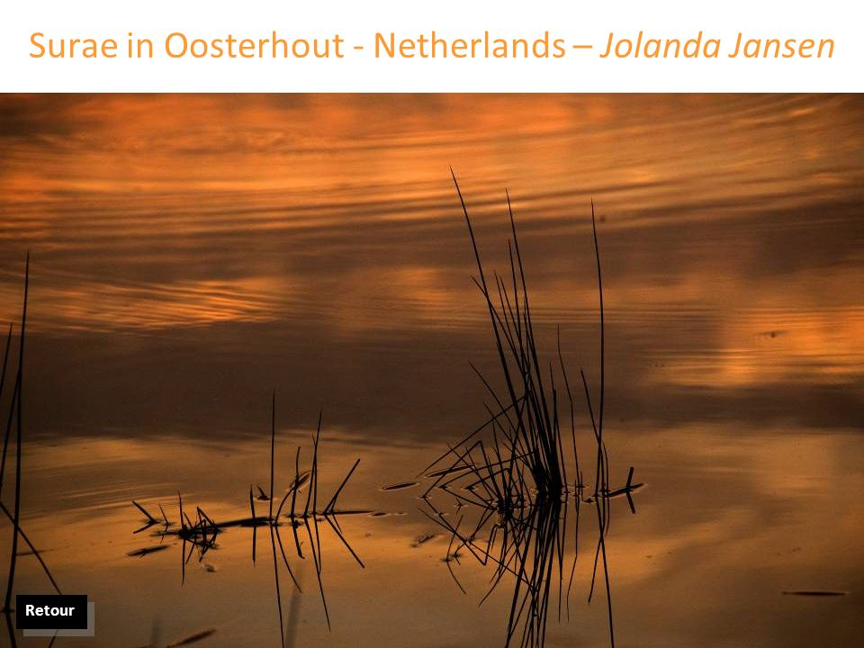 Surae in Oosterhout - Netherlands – Jolanda Jansen Retour