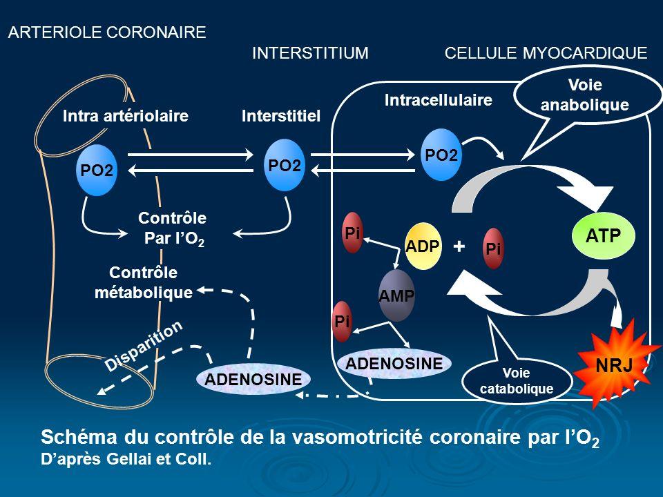 ARTERIOLE CORONAIRE INTERSTITIUM CELLULE MYOCARDIQUE PO2 Intra artériolaireInterstitiel Contrôle Par lO 2 PO2 ATP ADP + Pi Voie anabolique NRJ Pi ADEN