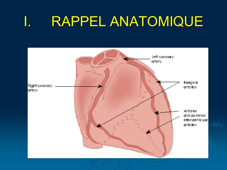 I.RAPPEL ANATOMIQUE