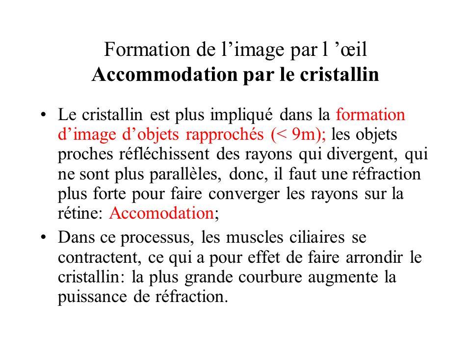 Formation de limage par l œil Accommodation par le cristallin Le cristallin est plus impliqué dans la formation dimage dobjets rapprochés (< 9m); les