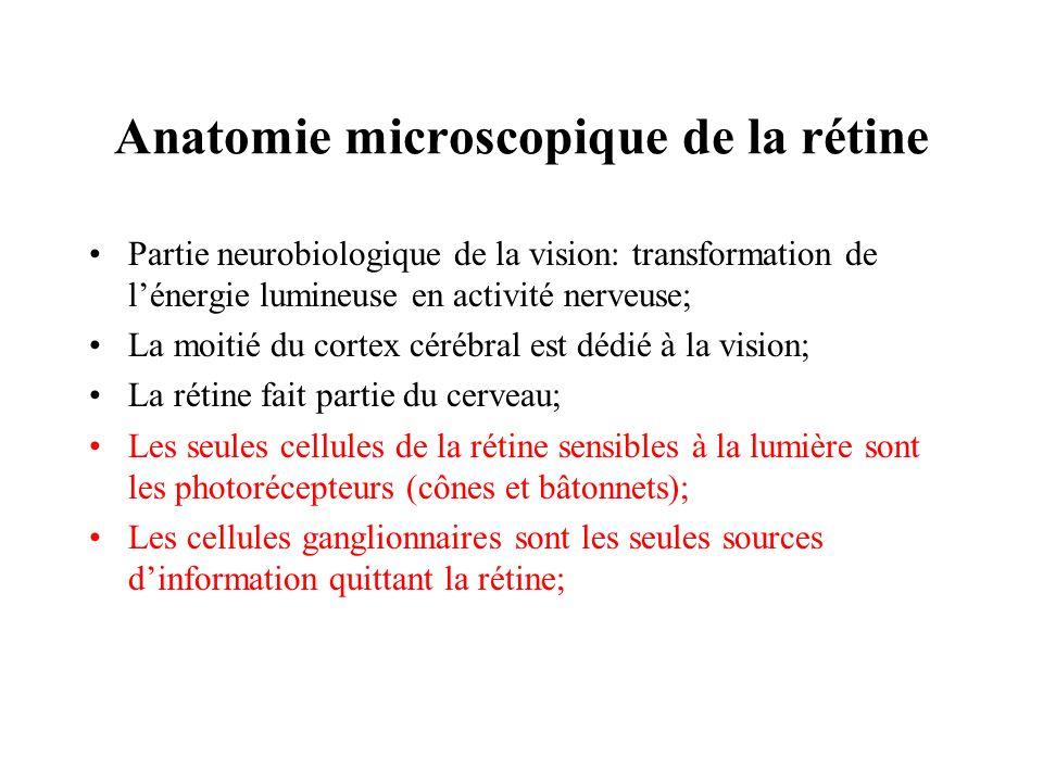 Anatomie microscopique de la rétine Partie neurobiologique de la vision: transformation de lénergie lumineuse en activité nerveuse; La moitié du corte