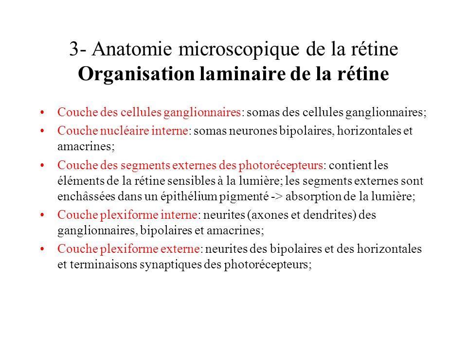 3- Anatomie microscopique de la rétine Organisation laminaire de la rétine Couche des cellules ganglionnaires: somas des cellules ganglionnaires; Couc