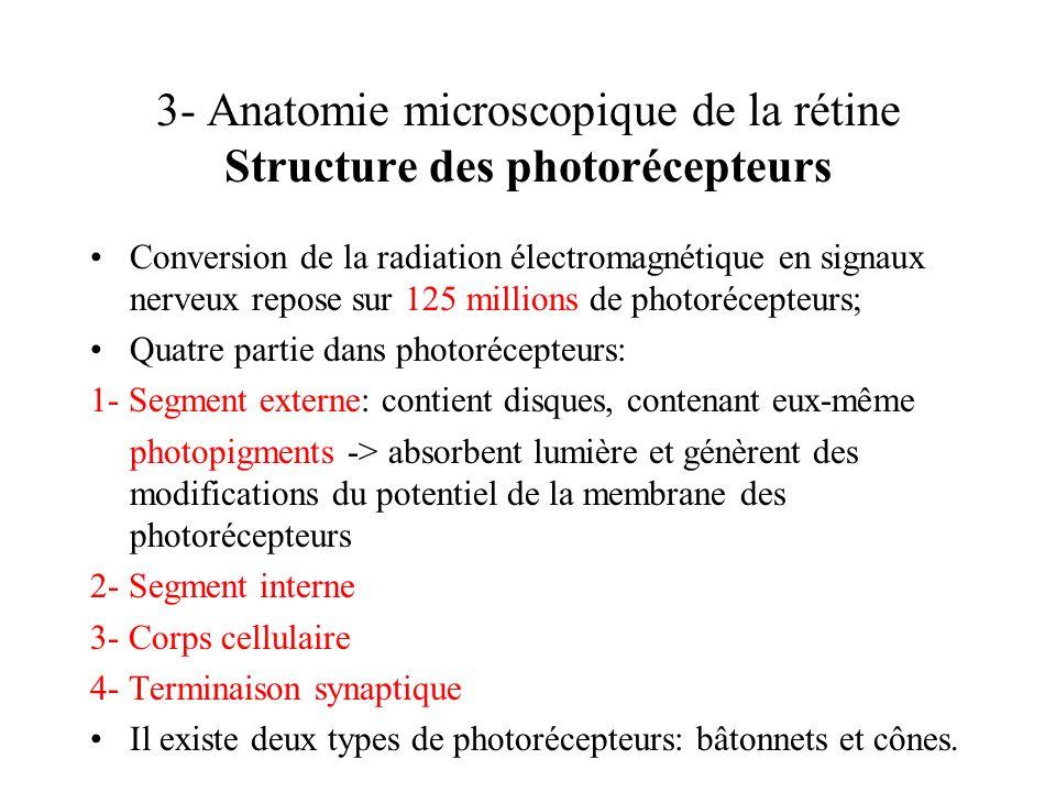 3- Anatomie microscopique de la rétine Structure des photorécepteurs Conversion de la radiation électromagnétique en signaux nerveux repose sur 125 mi