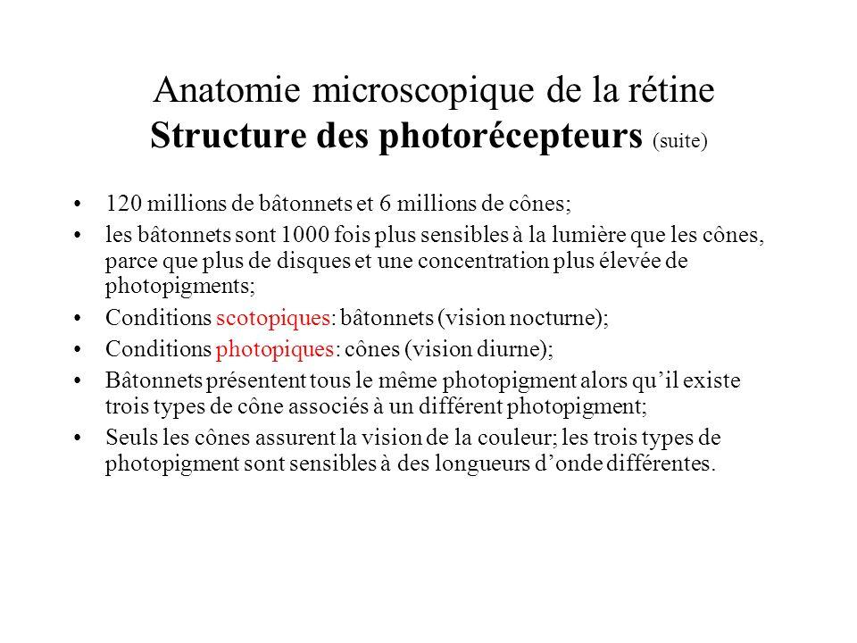 Anatomie microscopique de la rétine Structure des photorécepteurs (suite) 120 millions de bâtonnets et 6 millions de cônes; les bâtonnets sont 1000 fo