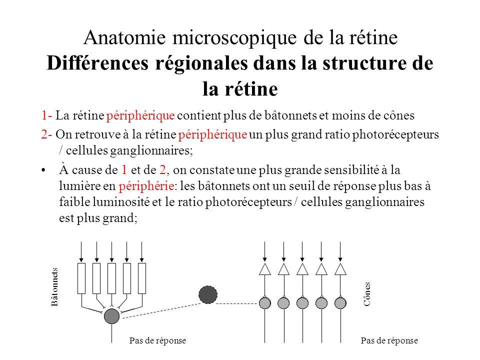 Anatomie microscopique de la rétine Différences régionales dans la structure de la rétine 1- La rétine périphérique contient plus de bâtonnets et moin
