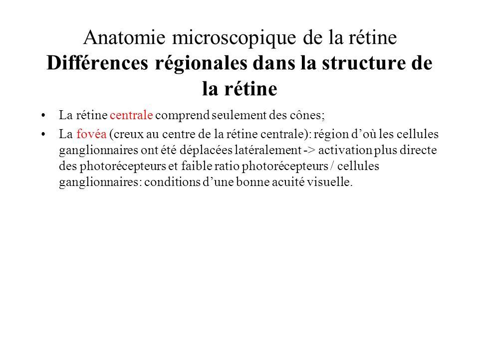 Anatomie microscopique de la rétine Différences régionales dans la structure de la rétine La rétine centrale comprend seulement des cônes; La fovéa (c