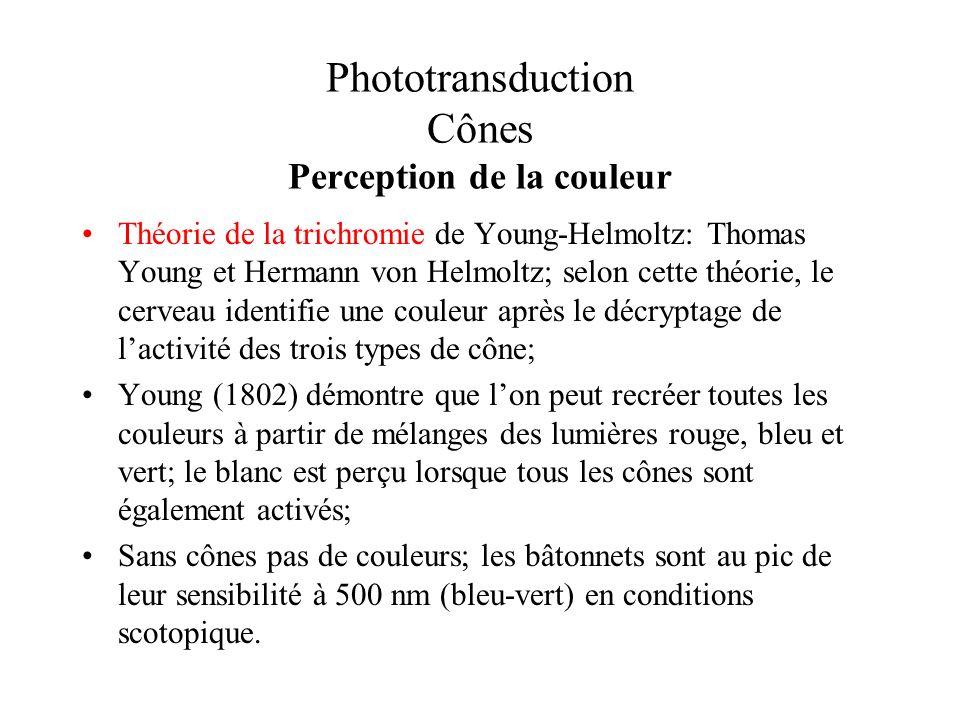 Phototransduction Cônes Perception de la couleur Théorie de la trichromie de Young-Helmoltz: Thomas Young et Hermann von Helmoltz; selon cette théorie