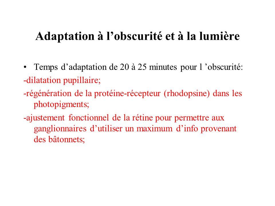 Adaptation à lobscurité et à la lumière Temps dadaptation de 20 à 25 minutes pour l obscurité: -dilatation pupillaire; -régénération de la protéine-ré