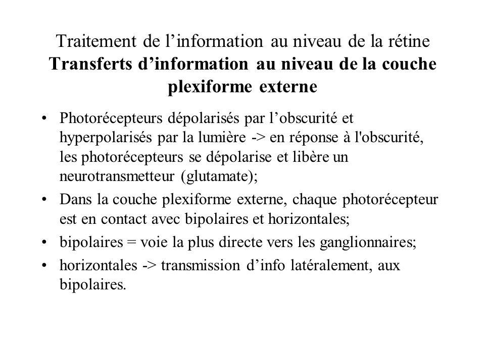 Traitement de linformation au niveau de la rétine Transferts dinformation au niveau de la couche plexiforme externe Photorécepteurs dépolarisés par lo