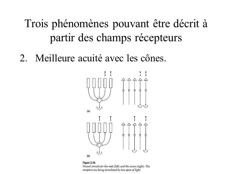 Trois phénomènes pouvant être décrit à partir des champs récepteurs 2.Meilleure acuité avec les cônes.