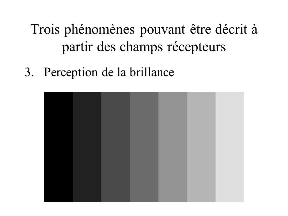 Trois phénomènes pouvant être décrit à partir des champs récepteurs 3.Perception de la brillance