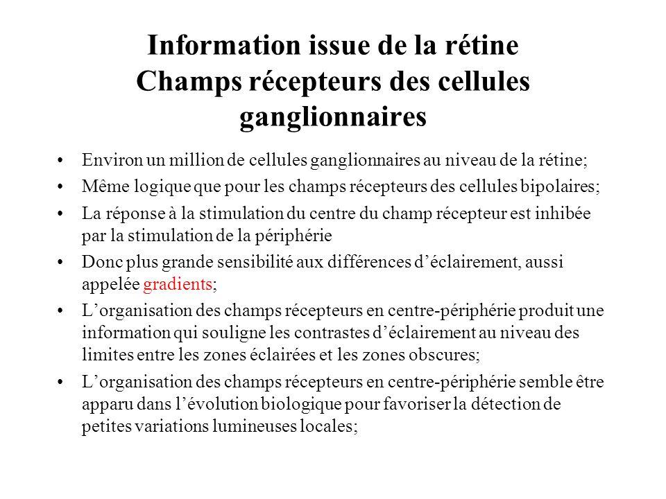 Information issue de la rétine Champs récepteurs des cellules ganglionnaires Environ un million de cellules ganglionnaires au niveau de la rétine; Mêm