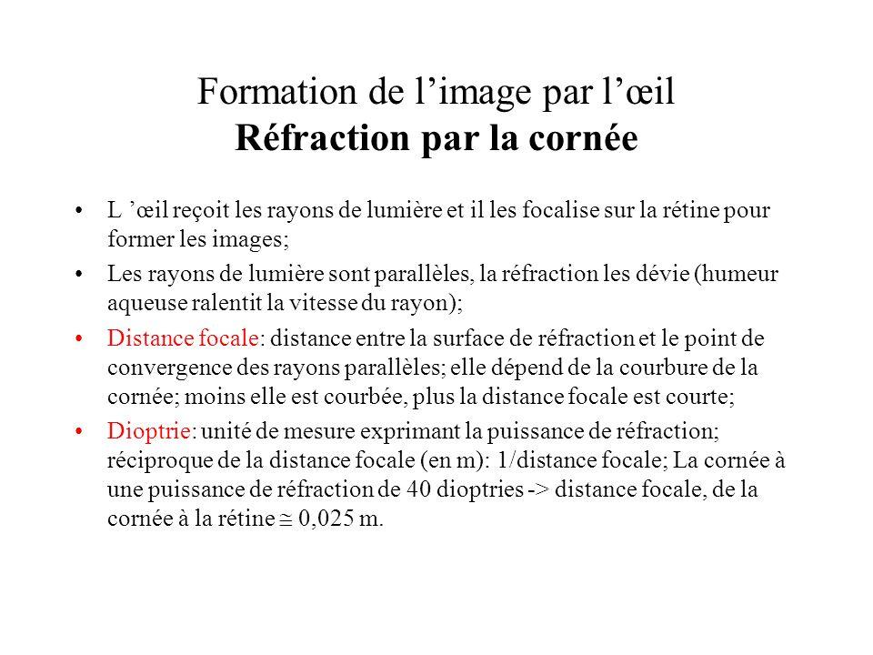 Formation de limage par lœil Réfraction par la cornée L œil reçoit les rayons de lumière et il les focalise sur la rétine pour former les images; Les
