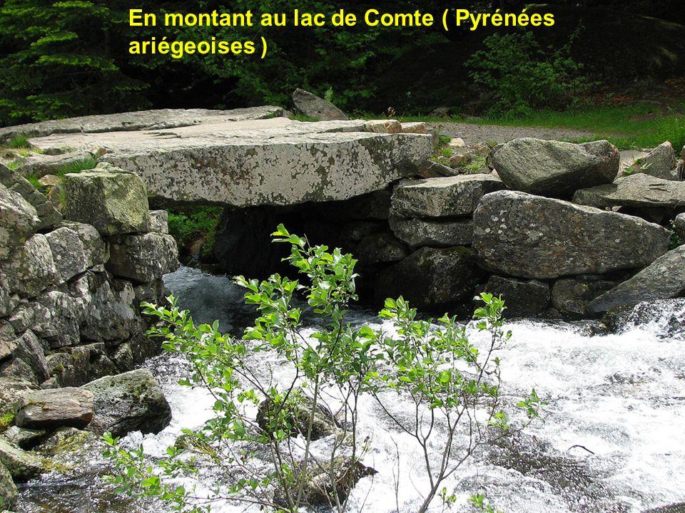 A St Aurens ( Hautes Pyrénées )
