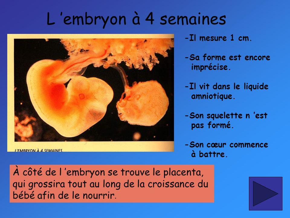 Le fœtus à 8 mois -Il pèse 2 ¼kg et mesure 43cm.