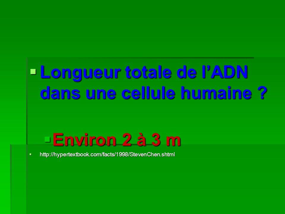 Longueur totale de lADN dans une cellule humaine ? Longueur totale de lADN dans une cellule humaine ? Environ 2 à 3 m http://hypertextbook.com/facts/1