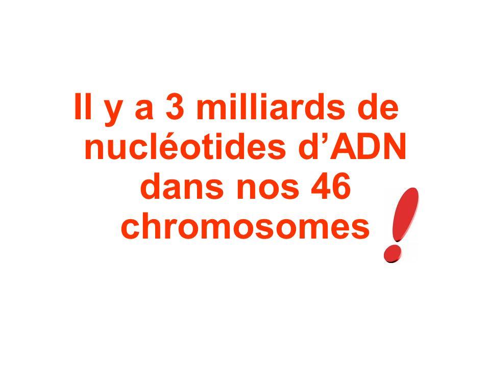 Il y a 3 milliards de nucléotides dADN dans nos 46 chromosomes
