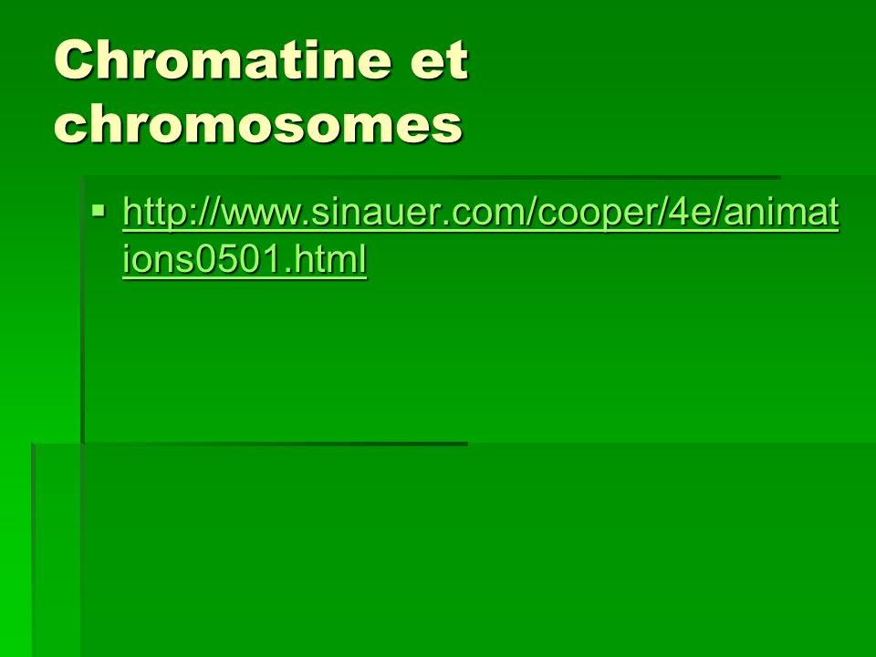 Chromatine et chromosomes http://www.sinauer.com/cooper/4e/animat ions0501.html http://www.sinauer.com/cooper/4e/animat ions0501.html http://www.sinau