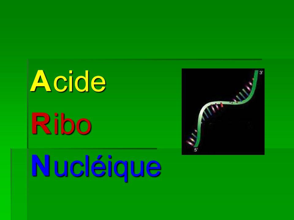 ARN cideiboucléique