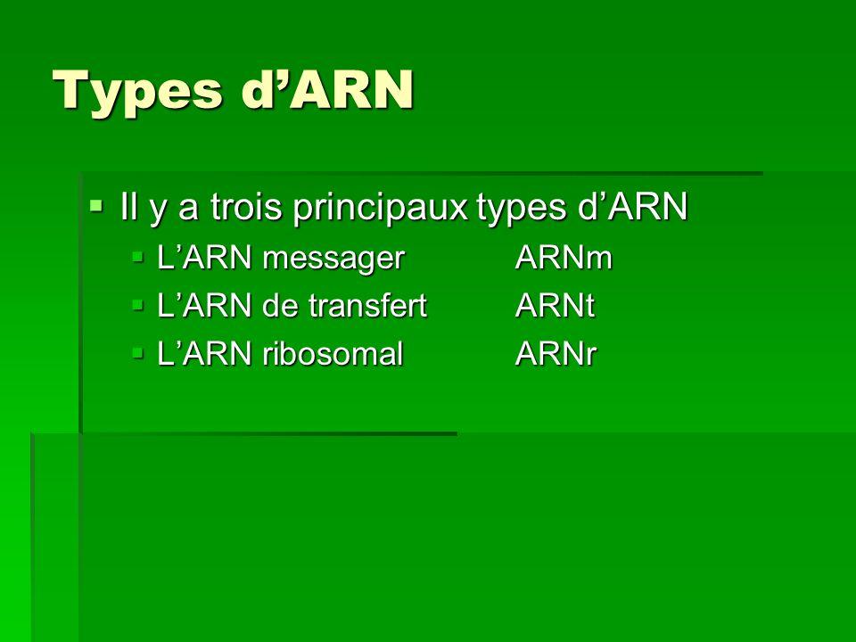 Types dARN Il y a trois principaux types dARN Il y a trois principaux types dARN LARN messagerARNm LARN messagerARNm LARN de transfertARNt LARN de tra