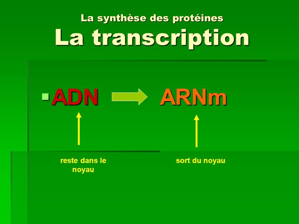 La synthèse des protéines La transcription ADNARNm ADNARNm reste dans le noyau sort du noyau