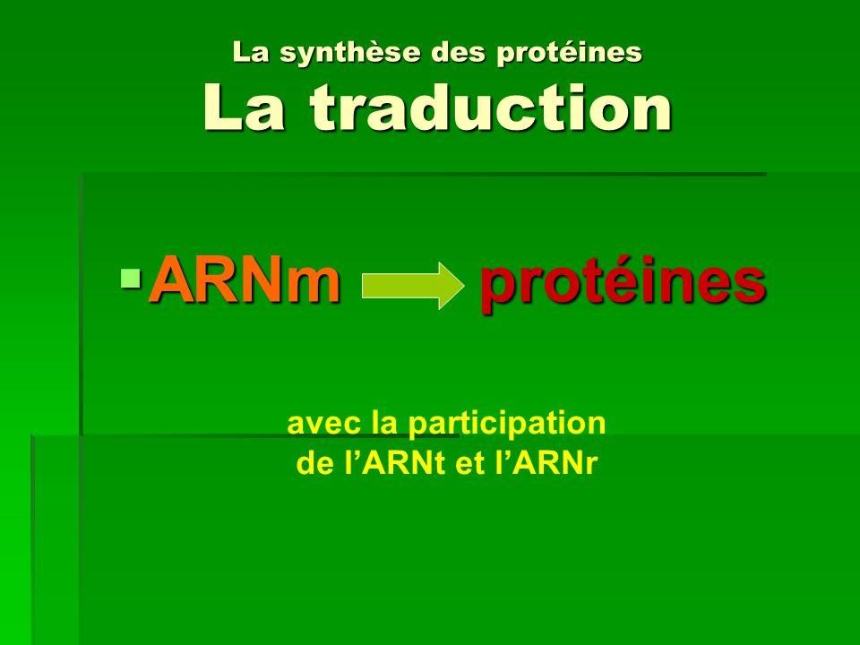 La synthèse des protéines La traduction ARNm protéines ARNm protéines avec la participation de lARNt et lARNr
