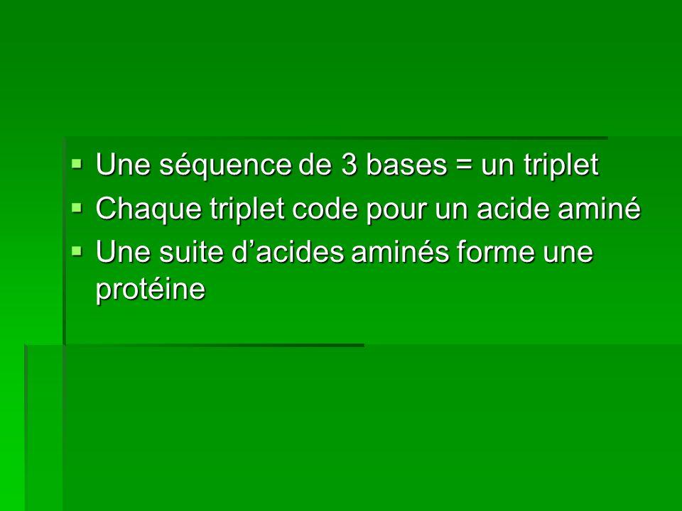 Une séquence de 3 bases = un triplet Une séquence de 3 bases = un triplet Chaque triplet code pour un acide aminé Chaque triplet code pour un acide am